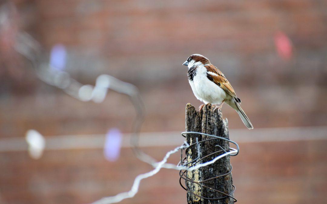 Nu da vrabia din mână pe cea de pe gard