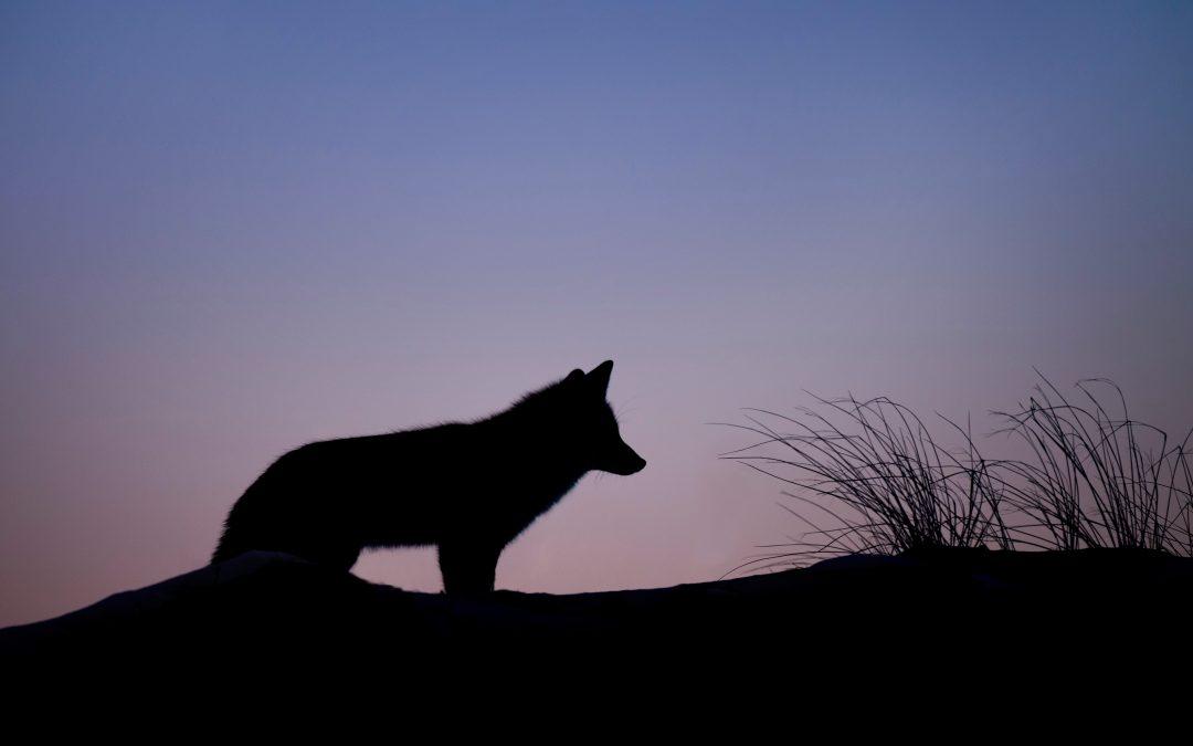 Cine se bagă între lupi, trebuie să urle